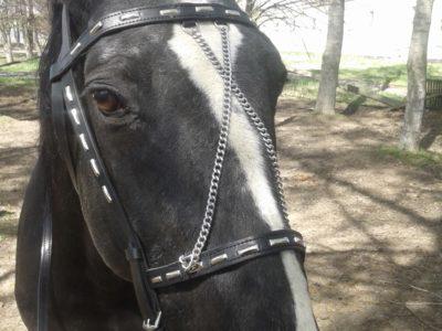 Купить уздечку для лошади